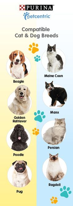 Thinking of adopting a new kitten or puppy for your family, but already have one or the other?  Dog Facts & Tips for owners -- Repin to your own inspiration board --