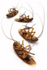 Natural Bug and Pest Repellents