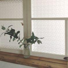 rookuさんの、DIY,ユーカリ,キッチン出窓,いただきもの♥︎,のお部屋写真