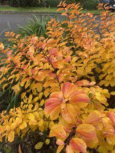 Fall, Garden, Plants, Painting, Color, Design, Autumn, Garten, Fall Season