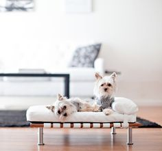 Pet Daybed