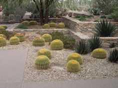Desert Backyard Landscaping Ideas Garden Landscaping Ideas Backyard Desert Landscaping Ideas,Backgrounds