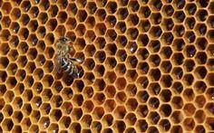 #world #news  Annual quota for Ukraine honey exports to EU ends within first 10 days  #FreeKarpiuk #FreeUkraine