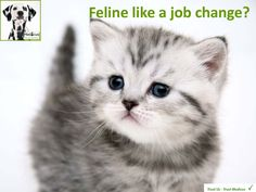 If you are feline like a job change, contact us on 01926 356356 - lines open 8am to 8pm Monday to Friday and weekends web chat. www.medicusvets.com