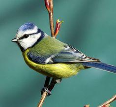 That little bird has very colorful feathers.    あの小鳥はとても色鮮やかな羽をしている。