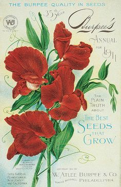 Burpee Seeds and Plants - Home Garden, Vegetable Seeds, Annual Flowers - Burpee Garden Catalogs, Seed Catalogs, Vintage Postcards, Vintage Images, Vintage Ephemera, Vintage Prints, Vintage Art, Burpee Seeds, Vintage Seed Packets