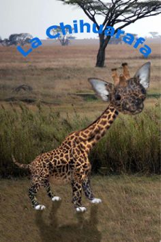 Para esta postal teníamos que hacer un fotomontaje mezclando animales. Yo mezclé mi chihuahua con una jirafa.
