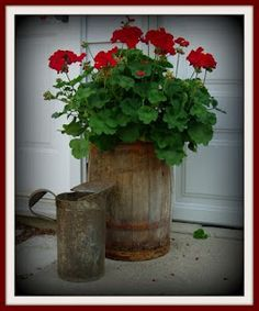 an old barrel and geraniums...this flower looks good planted in anything...but the barrel is so rustic country.