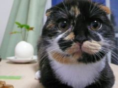 ネコジマン|waltzの日常|猫画像,猫写真の投稿サイト