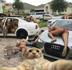 Cute Baby Animals on Love Cute Animals Rich Kids Of Instagram, New Instagram, Troll, Video Humour, Perfect Selfie, Cat Selfie, Partying Hard, Cute Baby Animals, Funny Posts