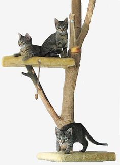 Cats Scratch Post. I seriously need to invest in one of these for Gloria