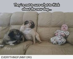 very cute! - http://everythingfunny.org