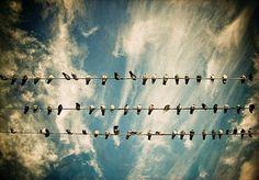 Still birds, moving skye