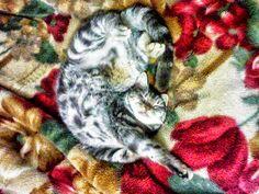 Pets Patinhas: Amo dormir na cama da mamãe Amo tudo isso! Adoro d...