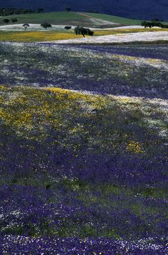I Like It Natural And Colorful...Always In  Alentejo's Plains In My Country Portugal !... http://samissomarspace.wordpress.com