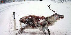 Tener una mascota en Alaska puede ser algo muy peligroso debido al fuerte invierno que sufre esta zona de la Tierra