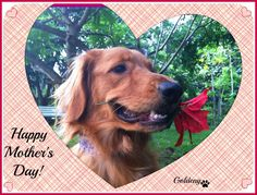 HAPPY MOTHER'S DAY to all the human mothers and doggie/cat/or other pet mothers too! It's your day, so celebrate! We LOVE you!