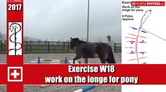 ch Online Training - Work-out Concentration & muscle training - horsephysio. Horse Exercises, Training Exercises, Lunging Horse, Mit License, Muscle Training, Abdominal Muscles, Horse Training, Horses, Workout
