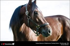 Hannah Beckett of Lynden, Ontario, is the photographer of this stunning shot of Yankee Bounty at Stephenson's Training Centre in Flamborough, Ont.