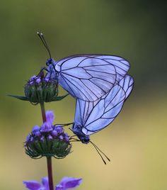 Purple Butterflies & Flowers
