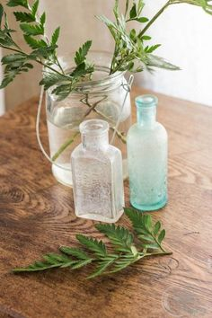 Ferns in Bottles and