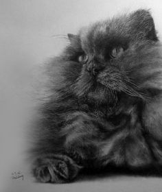 http://www.designsmix.com/design-magazine/amazing-pencil-graphite-realism-drawings-by-paul-lung/