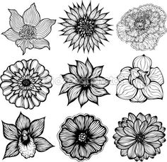 Set of 9 different hand drawn flowers, black and white isolated vector illustration — Stock Vector © Greenvalley #30474599