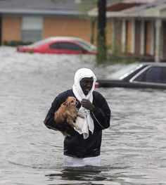How Hurricane Katrina Turned Pets Into People - BuzzFeed News