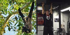 Weird [Monkey] Exercise Eliminates Shoulder Pain!!!