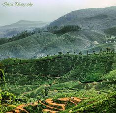 Tea Plantations,  Haputale, Sri Lanka (www.secretlanka.com)