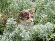 Give cats a place to roam and explore in your yard or garden >> http://www.hgtv.com/decorating-basics/cute-pets-in-our-favorite-spaces/pictures/index.html?soc=pinterest