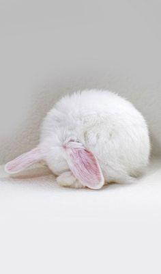 bunny furball