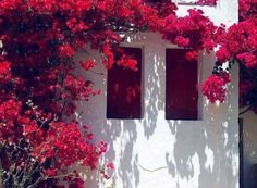 Marie Therese Magnan Facade and bougainvillea Facade with red shutters and red bougainvillea.