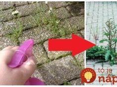 Toto vám zabralo najlepšie: 9 vecí, ktoré vykynožia burina na chodníku a v známkovej dlažbe!