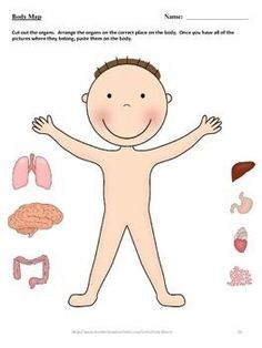 The Magic School Bus Inside the Human Body by Joanna Cole: A Teaching Guide Human Body Activities, Preschool Learning Activities, Preschool Science, Preschool Worksheets, Science For Kids, Teaching Ideas, Inside Human Body, The Human Body, Human Body Unit