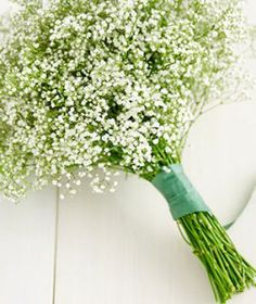 Green Baby's Breath. Use for center pieces  or bouquets. Great for budget brides