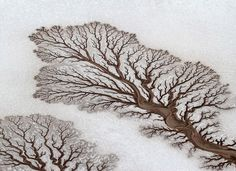 Aerial photograph by Adrian Franco was selected as National Geographic's Picture of the Day for April In it we see the incredible fractal patterns rivers (now dried out) have made as they spread into the salt flats of the Baja California Desert in Mexico. Baja California, Fractal Patterns, Patterns In Nature, Tree Patterns, Foto One, Art Quotidien, Rivers In The Desert, Fractals In Nature, Desert Trees