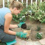 You Bet Your Garden - Can Plants Drain a Wet Spot?