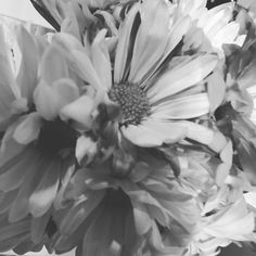 Flowers are a great way to raise my vibration! #loa #lawofattraction #spirituality #spiritualcoach #spiritualcoaching #nlp #vibration #hypnosis