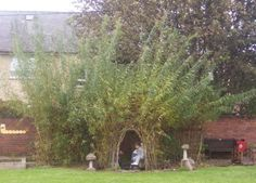 Willow domes and other crafts