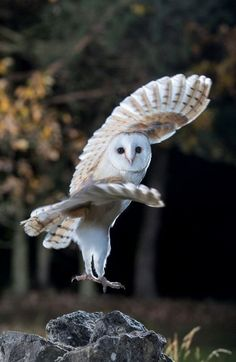 Hottest Pictures birds of prey owl Suggestions As being a wild birds of fodder photography, the most important difficulty the majority of make a complaint p Owl Photos, Owl Pictures, Beautiful Owl, Animals Beautiful, Funny Animals, Cute Animals, Photo Animaliere, Owl Bird, Tier Fotos