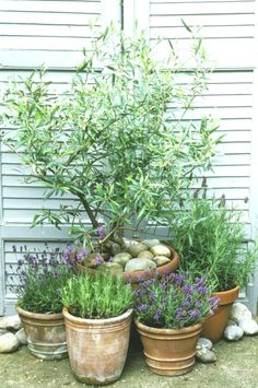 This is why you need olive trees in your home and garden, mediterran Back Gardens, Small Gardens, Outdoor Gardens, Easy Garden, Garden Pots, Garden Ideas, Garden Bar, Modern Landscaping, Backyard Landscaping