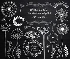 Calligraphy Discover Hand drawn doodle Dandelions Clipart White Flowers Doodle flowers PNG White doodle clipart Personal and Commercial Use Chalkboard Clipart, Chalkboard Doodles, Blackboard Art, Chalkboard Drawings, Chalkboard Lettering, Chalkboard Designs, Hand Lettering, Chalkboard Print, Chalk Lettering