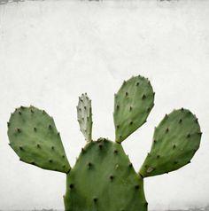 Photography Bonhomme cactus, cactus photo, Botanical Photography, Fine Art Print, Vintage Photography, Cottage Chic, Boho