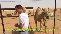 Camel Ride and Sand Ski #Dubai