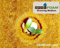 Foto Lettuce sprout. Peatfoam, grower foam.