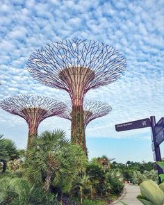nothing significant ever happens until a pattern is broken... -unknown ☁️⛅️☁️ #travel #wanderlust #vacation #singapore #supertrees #cloudporn #clouds #nature #naturelovers #cloud9 #wheninsg #flashbackfriday  #arcietravel #thosewerethedays #ig_alls