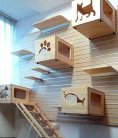 6' Modular CatsWall