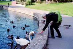 Swan with People