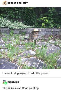 Van Gogh would be proud - Fun - Katzen Cute Funny Animals, Funny Cute, The Funny, Cute Cats, Hilarious, Van Gogh, Cat Memes, Funny Memes, Drawn Art